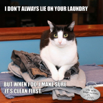 I Don't Always Lie On Your Laundry #TheMostInterestingCatInTheWorld