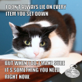 I don't always lie on every item you set down. But when I do, I make sure it's something you need right now. #MostInterestingCatInTheWorld