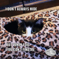 I don't always hide, but when I do, you can't find me. Calvin T. Katz, The Most Interesting Cat In The World. Stay comfy, my friends.