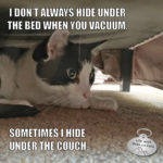 I Don't Always Hide Under The Bed When You Vacuum #MostInterestingCatInTheWorld