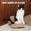I don't always sit in a box, but when I do, I fit.