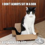 I Don't Always Sit In A Box #TheMostInterestingCatInTheWorld