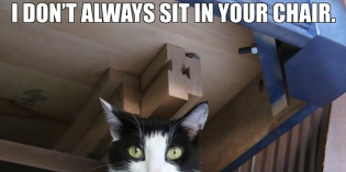 I Don't Always Sit In Your Chair #TheMostInterestingCatInTheWorld