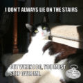 I Don't Always Lie On The Stairs but when I do you must stop over me. #MostInterestingCatInTheWorld