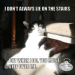 I Don't Always Lie On The Stairs #MostInterestingCatInTheWorld