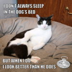 I Don't Always Sleep In The Dog's Bed #MostInterestingCatInTheWorld