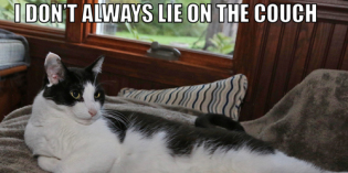 I Don't Always Lie On The Couch #MostInterestingCatInTheWorld
