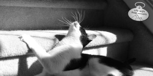 Photo: Sun Worship-purr
