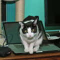 Calvin sitting on my laptop