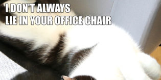 I Don't Always Lie in Your Chair #MostInterestingCatInTheWorld