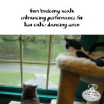 Haiku by Cat: Performance