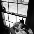 Two cats looking out the window at snow