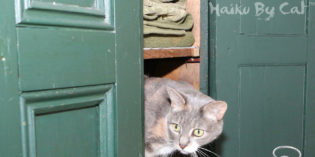 Haiku by Cat: Inspector