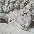 Portrait of a Cat Called Dawn by Thomas Clausen 100 cropped