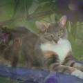 cat art: Morning Glory Dawn