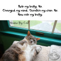 Haiku by Cat: Rub my belly. No. / Changed my mind. Scratch my chin. No. / Now rub my belly.