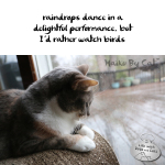 Haiku by Cat: Dance