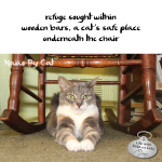 Haiku by Cat: Refuge