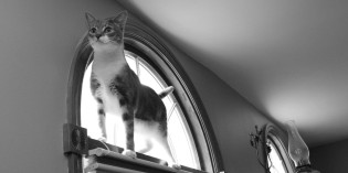 Photo: Cat on a windowsill