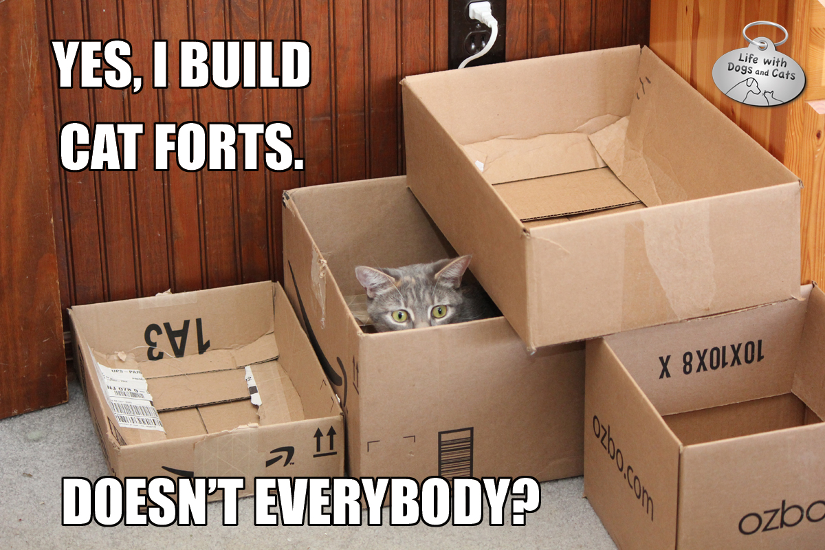 Yes, I build cat forts. Doesn't everybody?