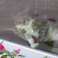 With reflections of impatiens surrounding her, Dawn the cat puts on the cute.