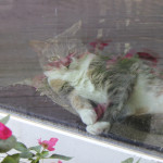 Photo: Cat art: reflections in pink