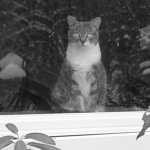 Window Watcher: My cat keeps her eyes on me