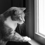 Photo: Cat, entranced