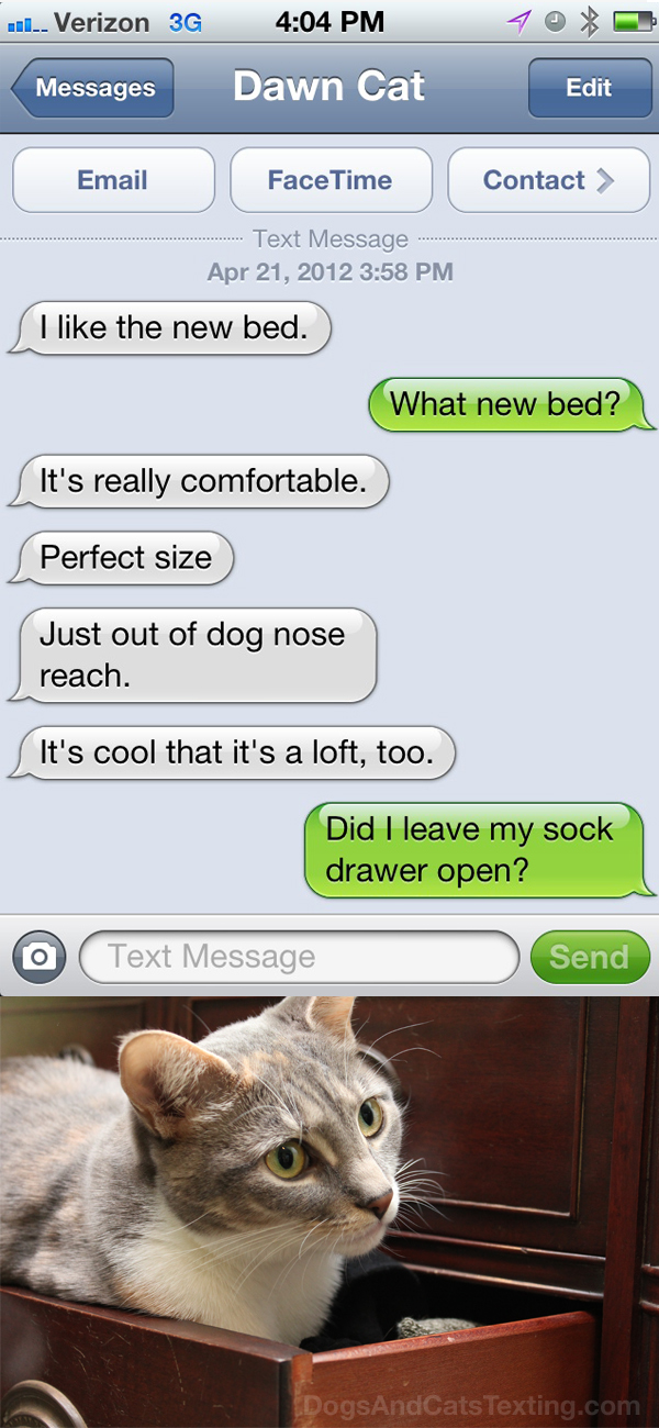 Text from Dawn the cat: Like the new bed. Don't care if it's a sock drawer.