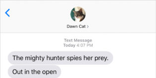 Text from Cat: The mighty hunter