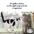 Haiku by Cat: for spotless dishes / use the right soap and hire / a supervisor