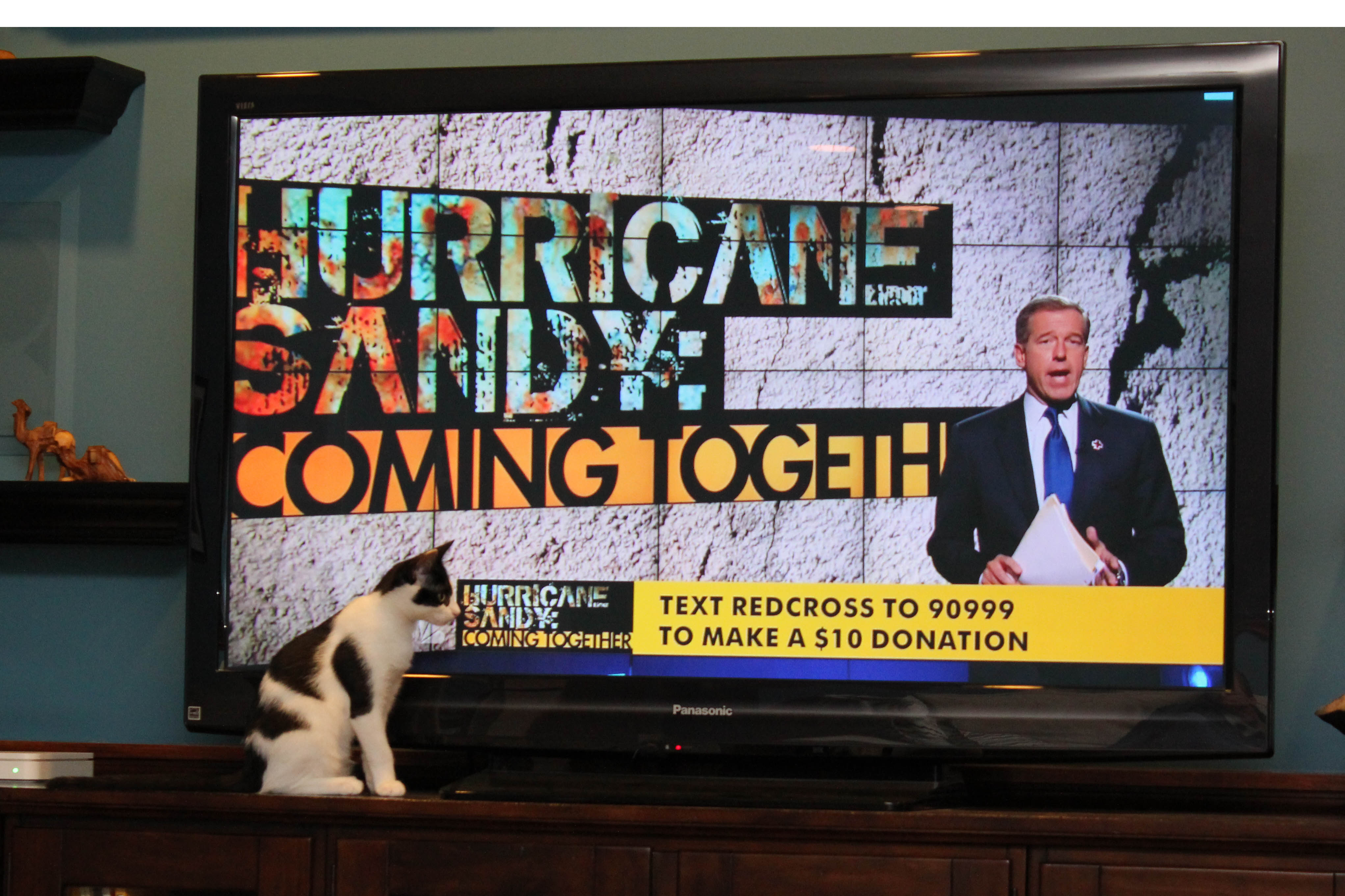 Elsa Claira the cat encourages people to call the red cross to donate to Hurricane Sandy relief