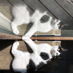 Double Trouble: Cat Reflection