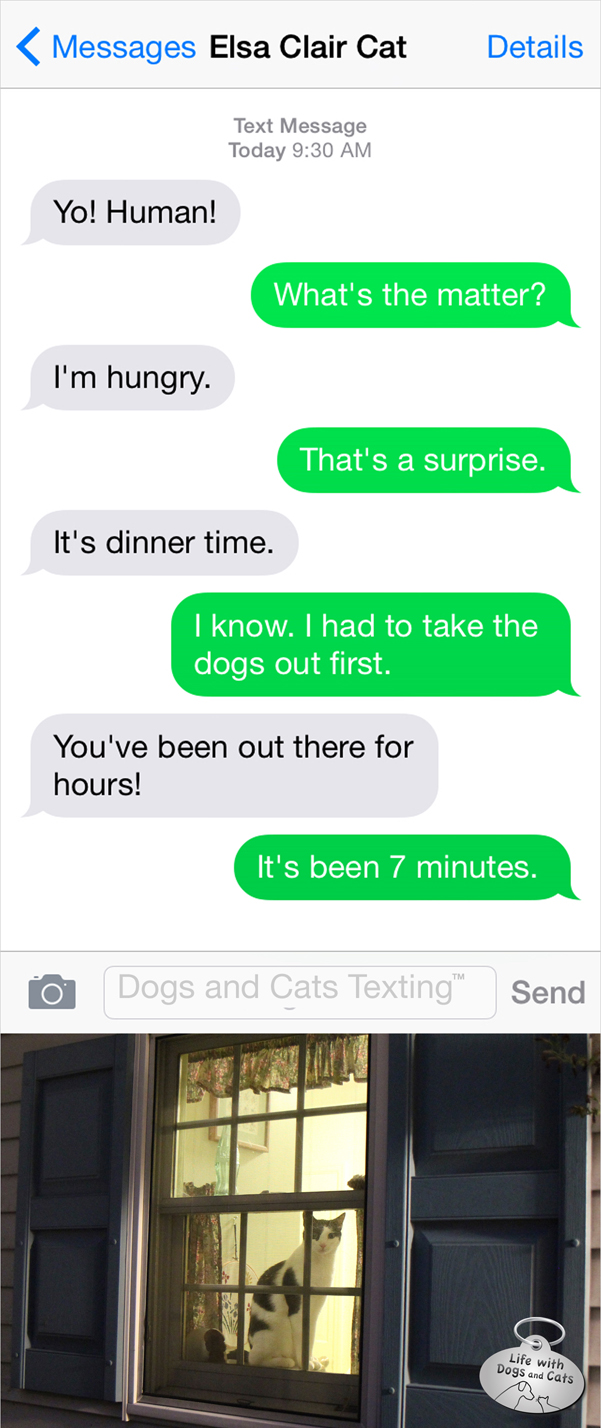 Text from Cat: It's dinner time : Life with Dogs and Cats