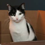 For Cats, Moving Into a New Box Can Be Stressful