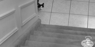 The Beast at the Bottom of the Stairs, or My Cat Waiting for Dinner