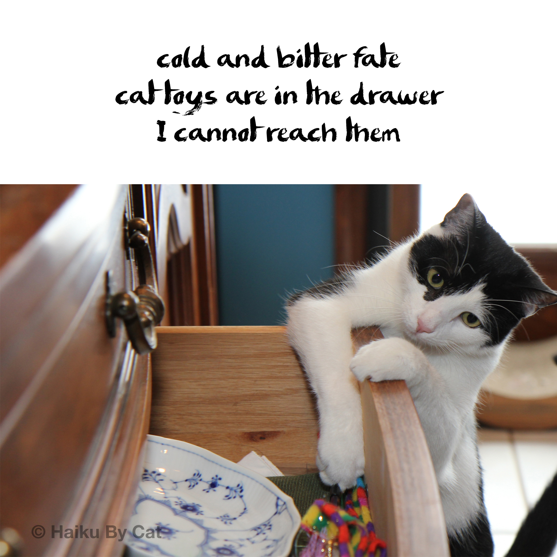 Haiku by Cat: cold and bitter fate / cat toys are in the drawer / I cannot reach them