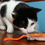 A Visit to Super Pet Expo, and I Fall in Love … with Cat Toys