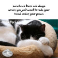 Haiku By Cat: sometimes there are days / where you just want to hide your / head under your paws