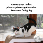Haiku by Cat: Yoga