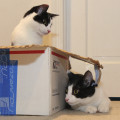 Reasons cats love boxes. You can play hide and seek with your brother.
