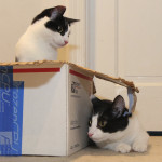 18 reasons cats love boxes