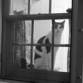 Cat watching from a window