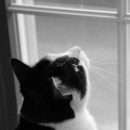 Cat looking out window