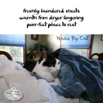Haiku by Cat: Lingering
