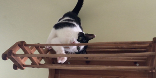 Elsa Clair's Gold Medal Purr-formance on the Cat Uneven Bars