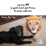 Haiku By Dog: Lion Share
