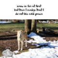 #HaikuByDog snow is fun at first but then I realize that I do not like cold paws