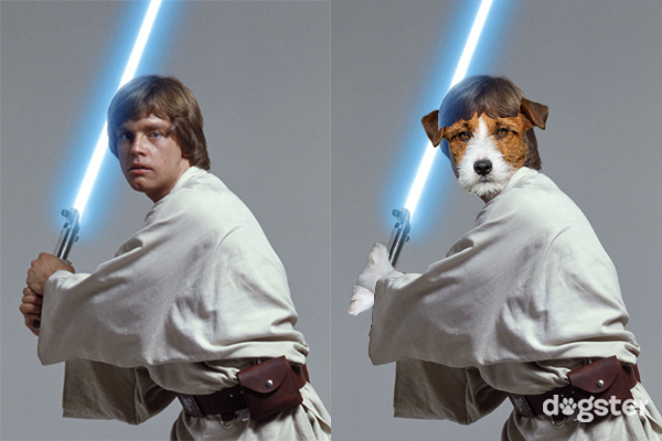 A Peek Behind The Scenes Of The Dogs Of Star Wars Life
