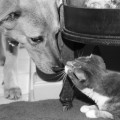 Dog and cat share a moment...from Life with Dogs and Cats.